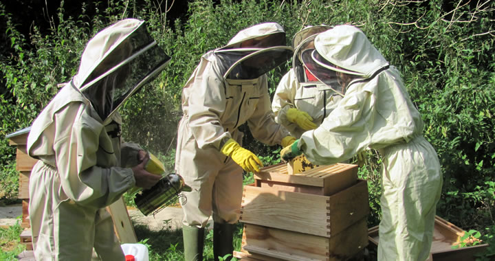 Creetown Beekeeping